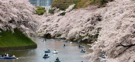 43 điều thú vị về người Nhật qua con mắt của người Phương Tây